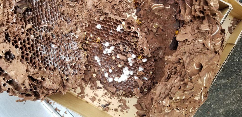 蜂・蜂の巣(ハチの巣)駆除